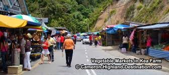 CAMERON HIGHLANDS PART IV