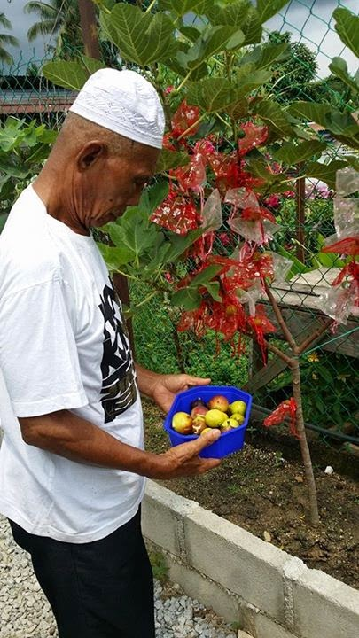 Amanda Putri's Fig Garden
