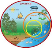 How Do Living Things Work Together?