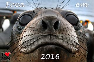 Foca em 2016