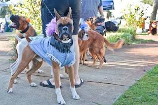 A Celebration of Dogs