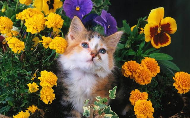 Foto de un Gatito entre las Flores Amarillas - Fotos de Gatos y Flores