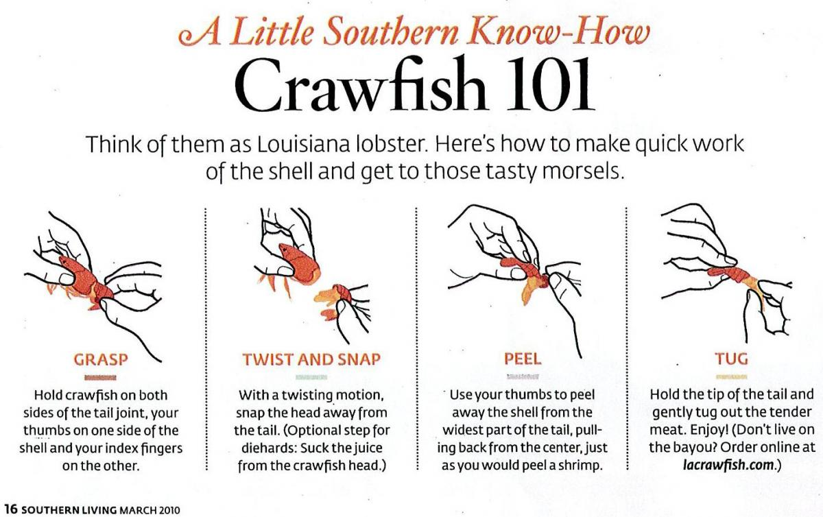 Crawfish 101: How To Eat Crawfish