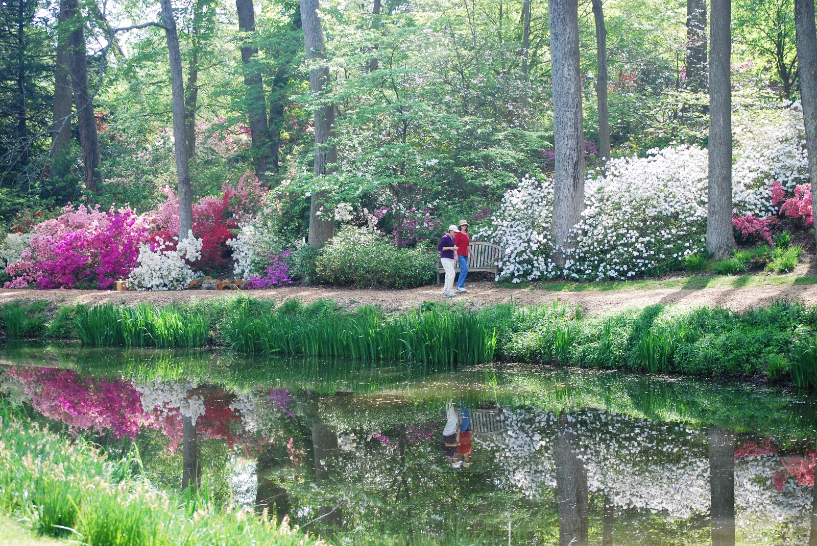 Brookside Gardens - Year-Round Beauty in a Tranquil Setting & Pittsburgh Owl Scribe: Brookside Gardens - Year-Round Beauty in a ...