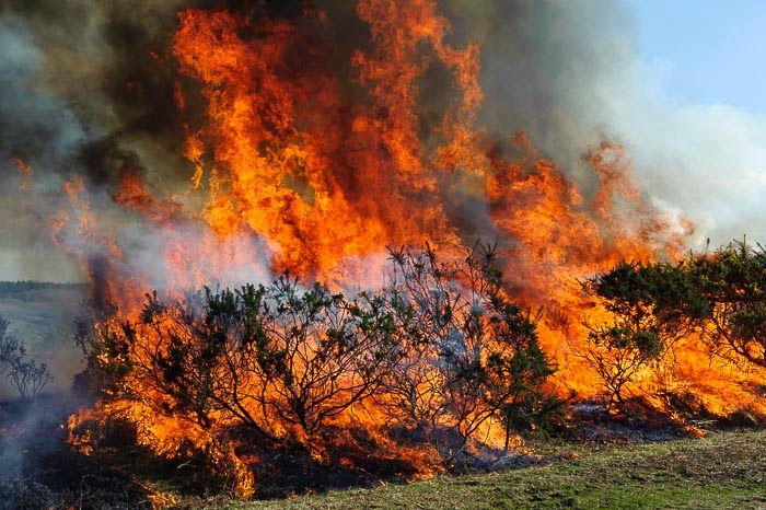 New Forest National Park photo showing controlled burning