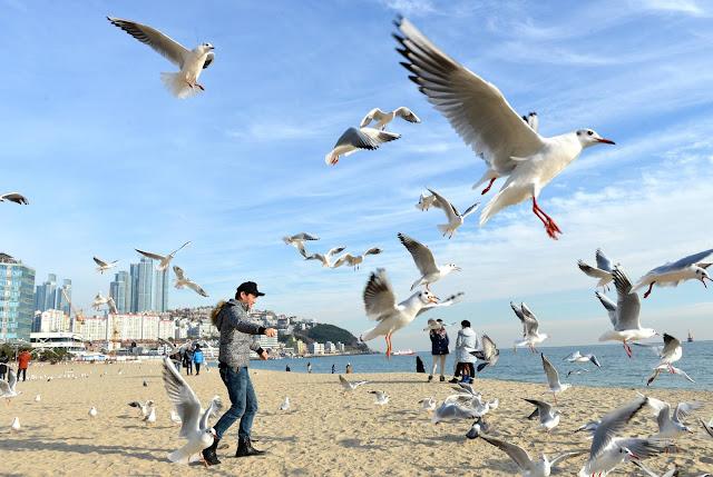 Bãi biển Haeundae Busan