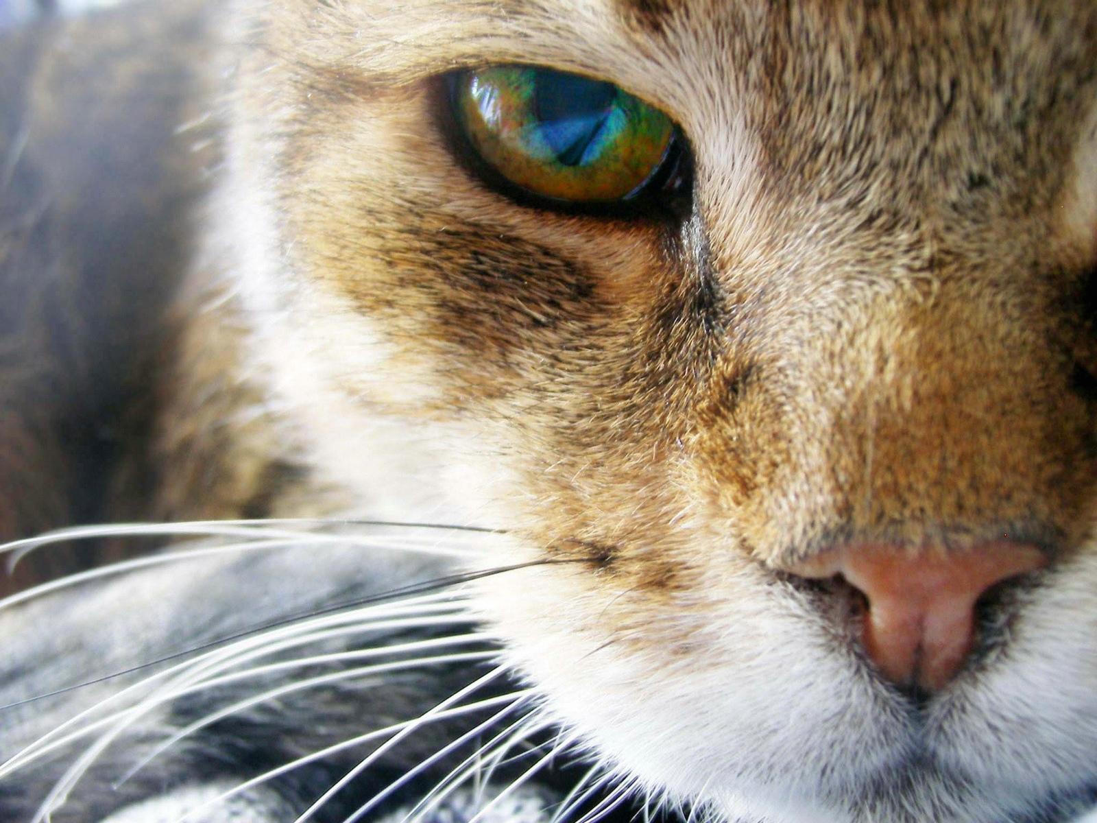 http://4.bp.blogspot.com/-myKOnr4F6Ao/T3YECsGhrWI/AAAAAAAAAUw/s47Q1qpAZK4/s1600/cat+wallpaper+4.jpg