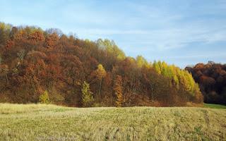 http://fotobabij.blogspot.com/2015/11/tu-na-razie-jest-sciernisko.html