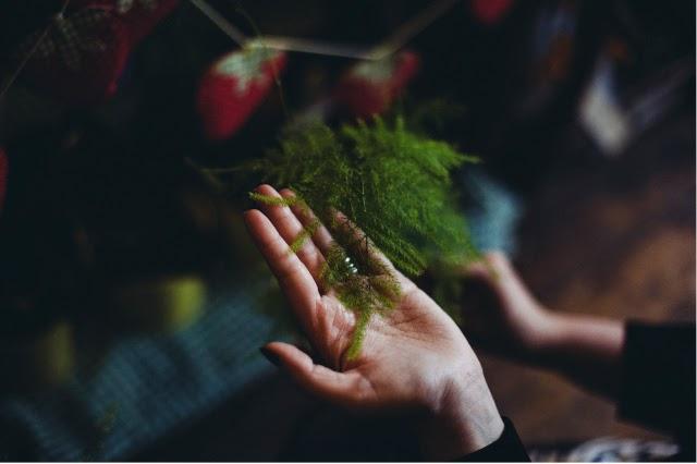 Alfies Studio - Delicate fern