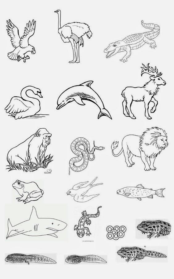 maestraescuela Conocimiento del medio los animales vertebrados
