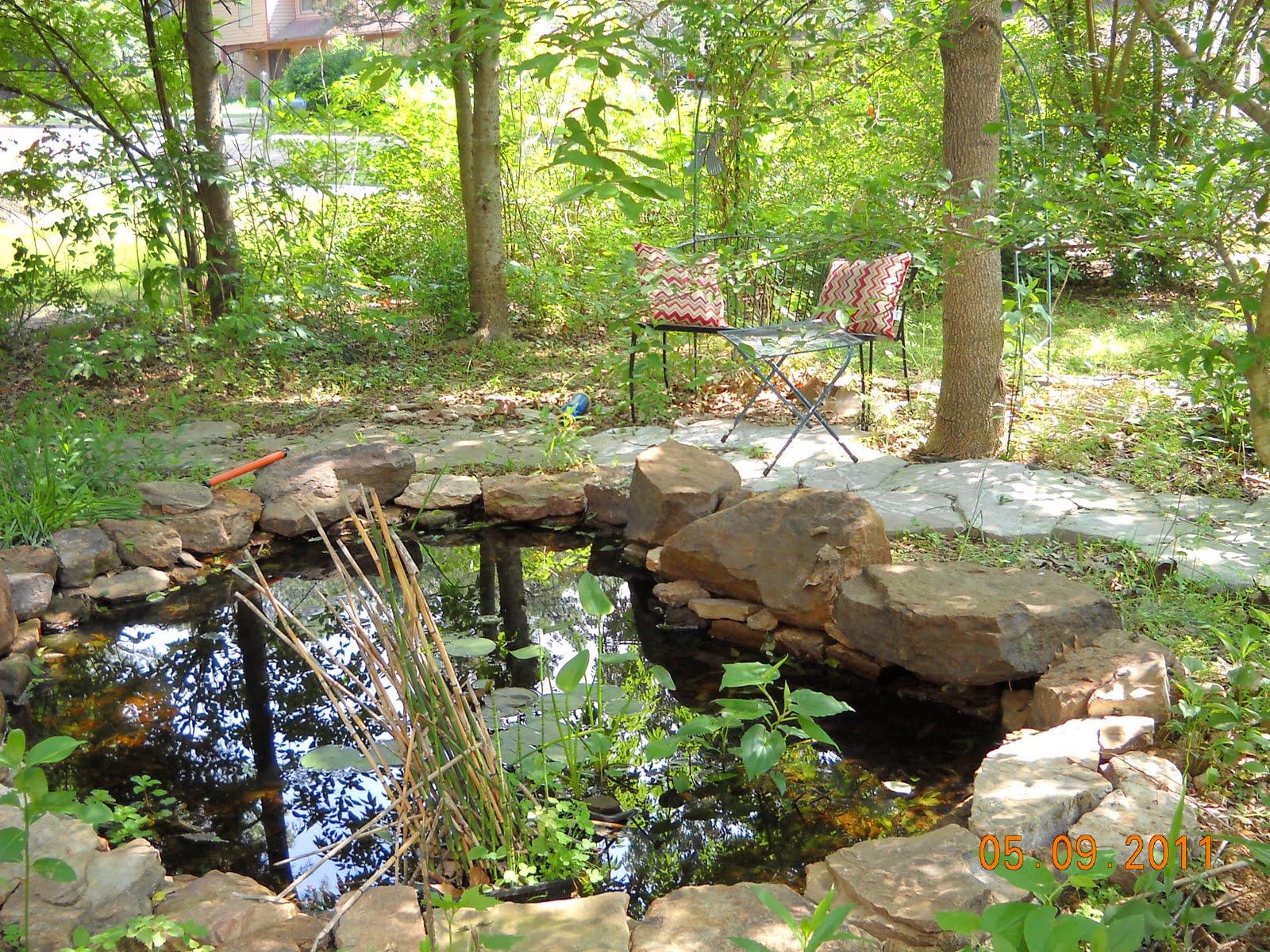 Backyard Frog Pond chickadee garden: backyard habitat