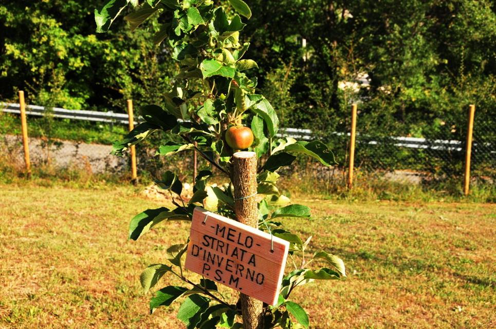 Noixlucoli onlus gli alberi del giardino della memoria la mela striata inverno poggio santa maria - Prezzi alberi da giardino ...