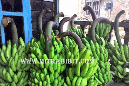Pisang ambon dan jenis jenis pisang komersil lain    berkualitas