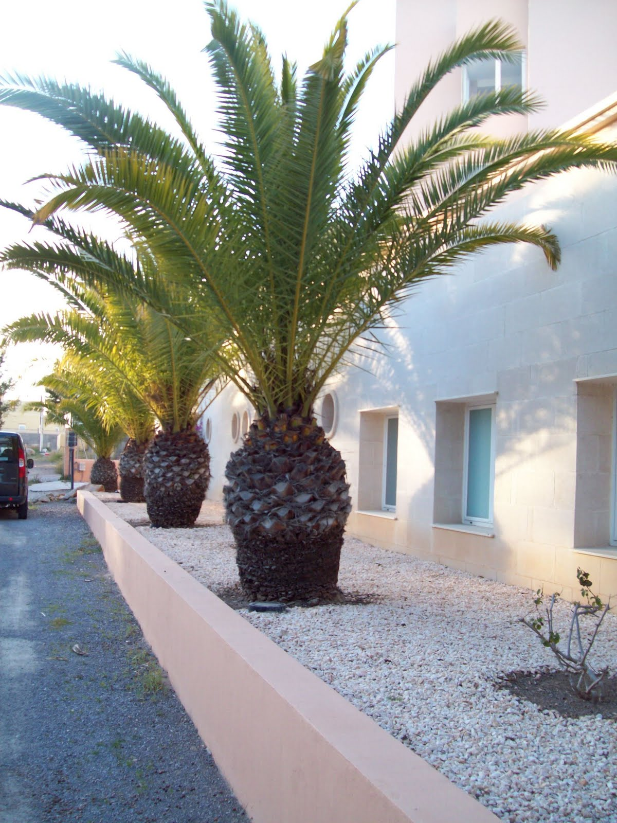 Palmeras de jardin imagui for Jardines con palmeras