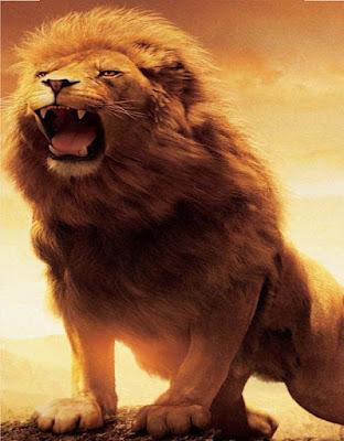 lion-photos