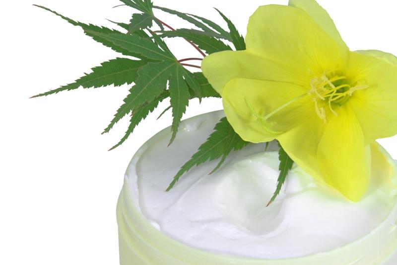 Primrose cream
