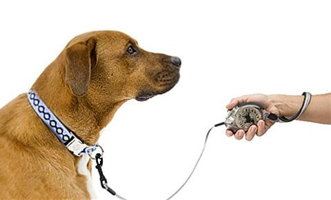 Correa extensible para perros