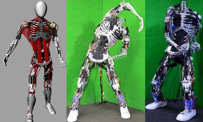 Kenshiro: el robot humanoide con más músculos jamás ...