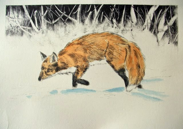 Fox in the snow drypoint print with watercolour