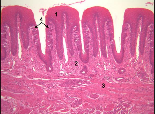 NLT ~ Moleculaire Gastronomie ~ Samenvatting (VWO4) | Samenvattingen