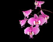 źródło (rozowe bajkowe kwiaty)
