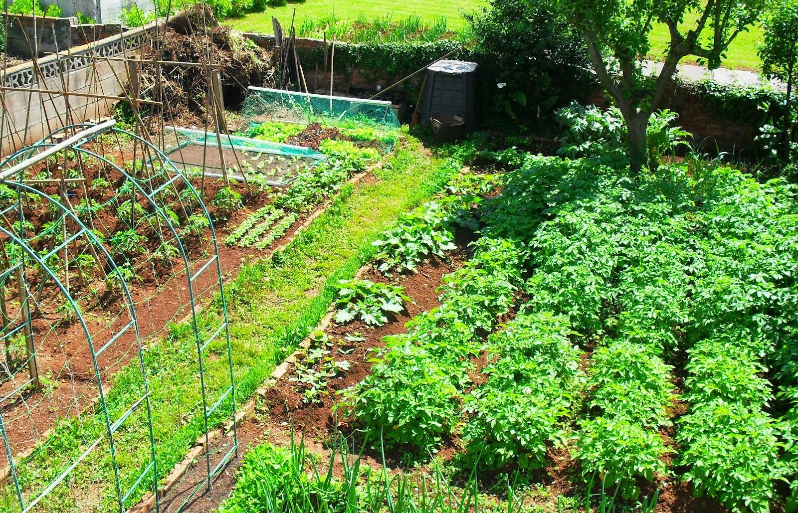 Agricultura org nica for Plantas para huerta organica
