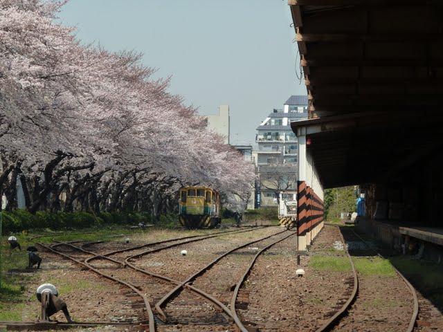 北王子貨物駅と桜