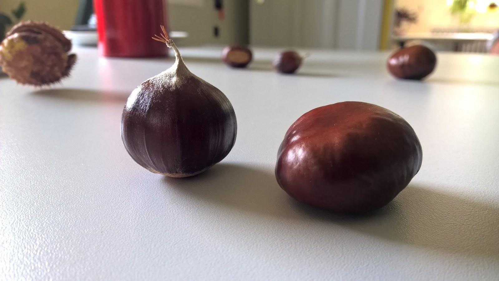lesmainsvertesblogspot diff233rences marron et ch226taigne