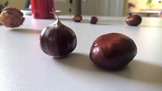 Châtaigne et marron