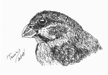 Aves de Tania