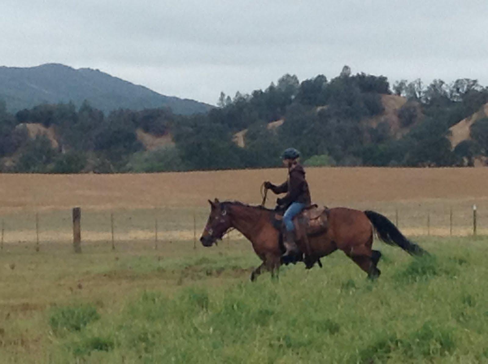 Baylie: my Quarter Horse!