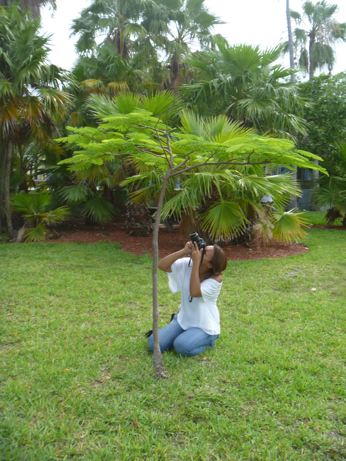 pleasure of gardening A pleasure garden is usually a garden that is open to the public for recreation and entertainment pleasure gardens differ from other public gardens by serving as.