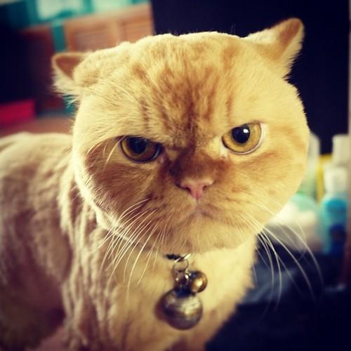 Gambar Kucing Marah godean.web.id