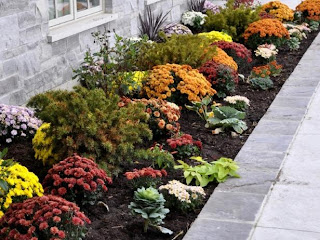 fall flowers in garden beds