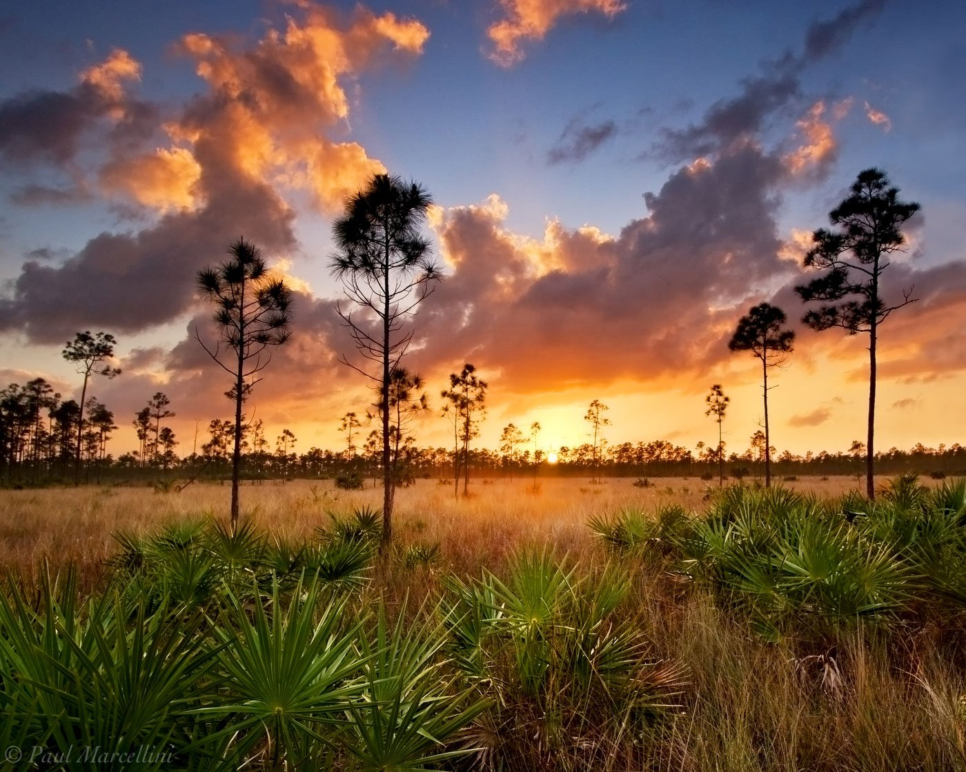 Florida Nature Tours