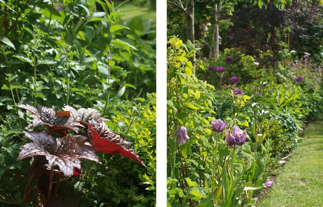 Blomstrende bede i junis nemme have