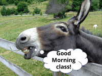 Donkey speaks - Good Morning class!