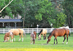 Front Pasture at the Draper location