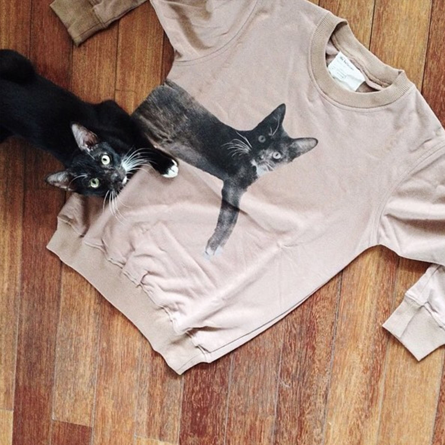 The Ballet Cats