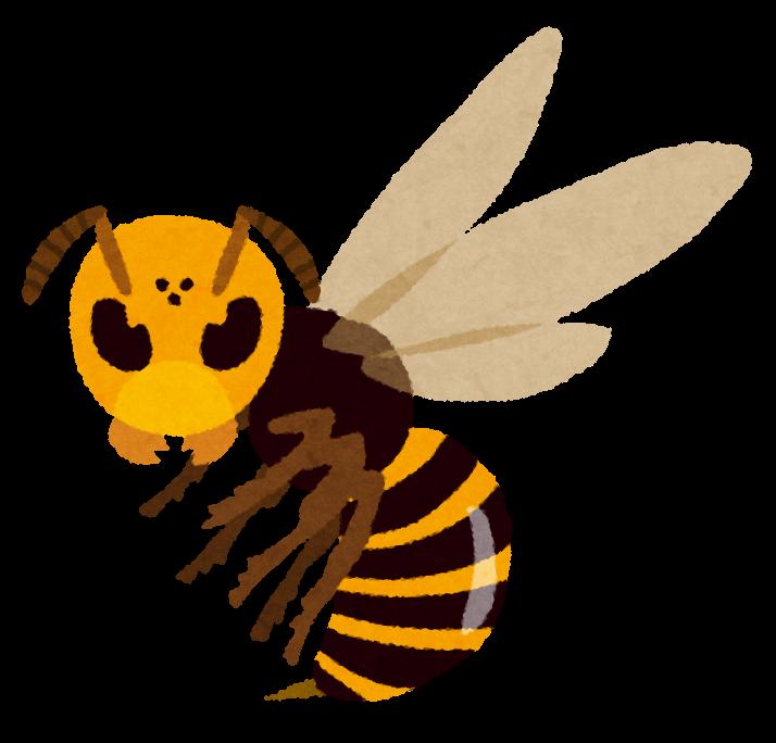 スズメバチの画像 p1_34
