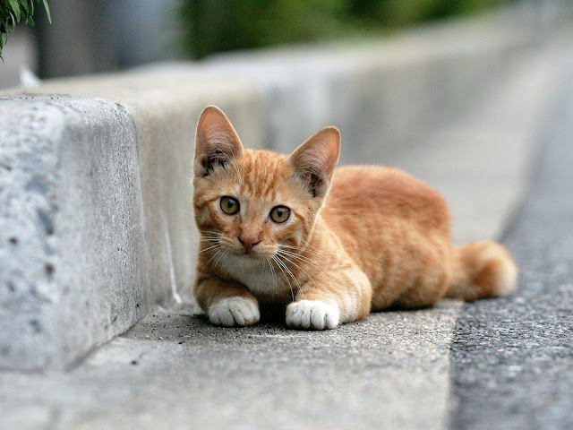 Hd achtergrond met een schattige rode kat naast de stoep in de goot