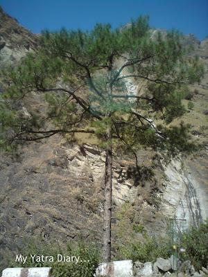 A tree stands tall on the Char Dham route in the Garhwal Himalayas in Uttarakhand