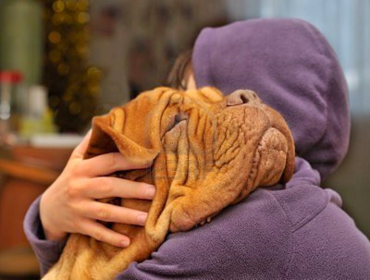 20 Reasons You Should Consider Having A Dog In Your Life, Backed by Science