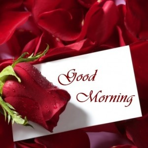 Good Morning Love Flower Wallpaper : Good Morning Love Flower Images Good Morning Flower Images For Love One Wishes Images 4U