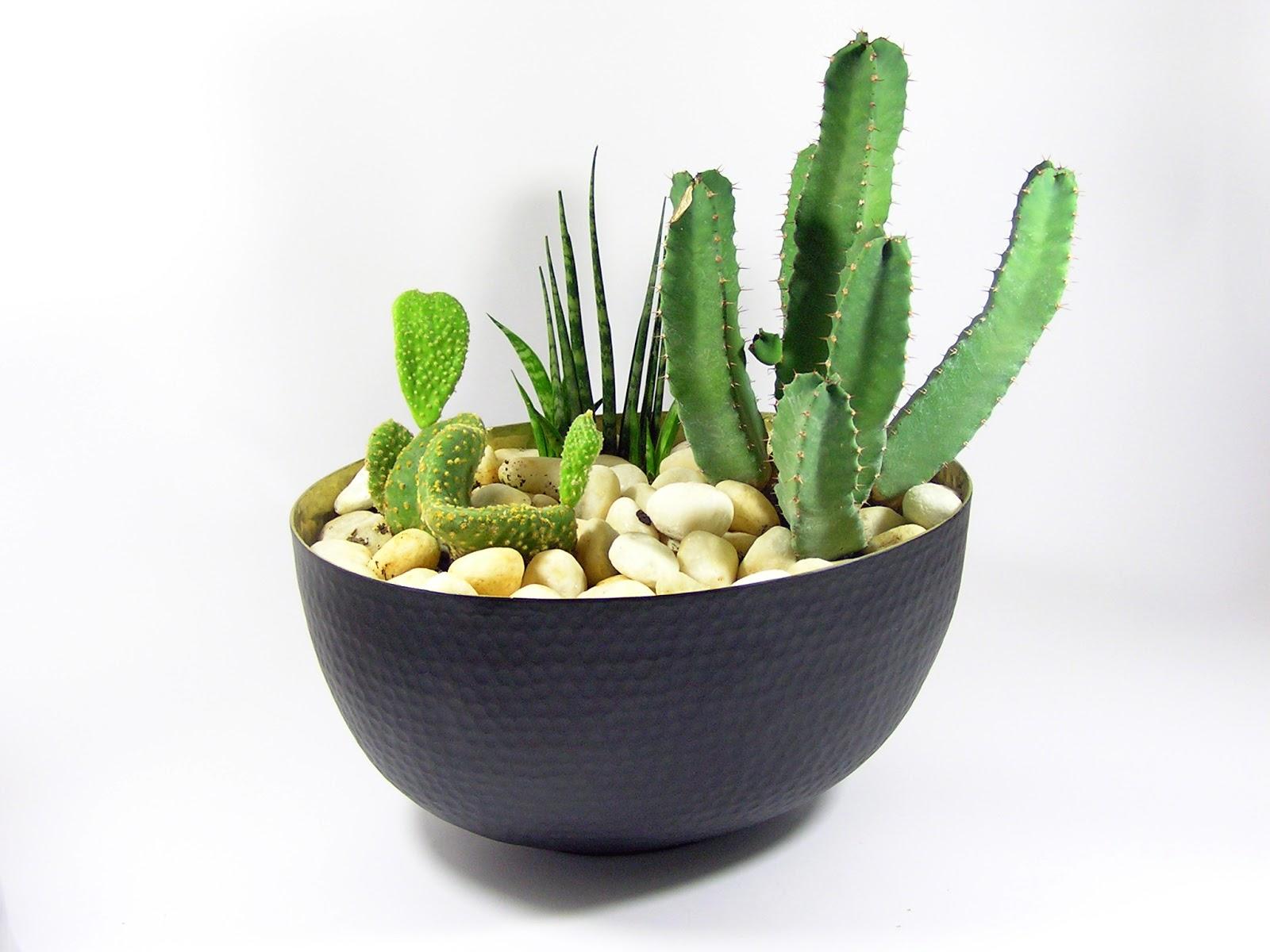 Little gardens at home primeras composiciones de cactus - Composiciones de cactus ...