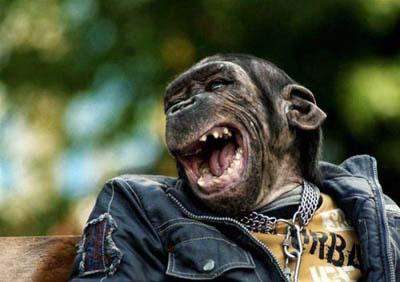 http://4.bp.blogspot.com/-n3CnpXzA-wI/TZMCsSS8dRI/AAAAAAAAAtE/Q50-eje4tH4/s1600/Happy-Smiling-Animals-016.jpg