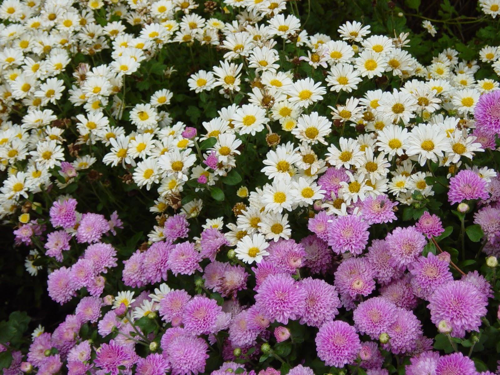 Shejunks fall flowers fall flowers izmirmasajfo