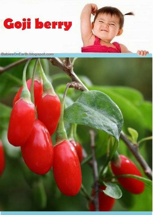 Baby Goji berry