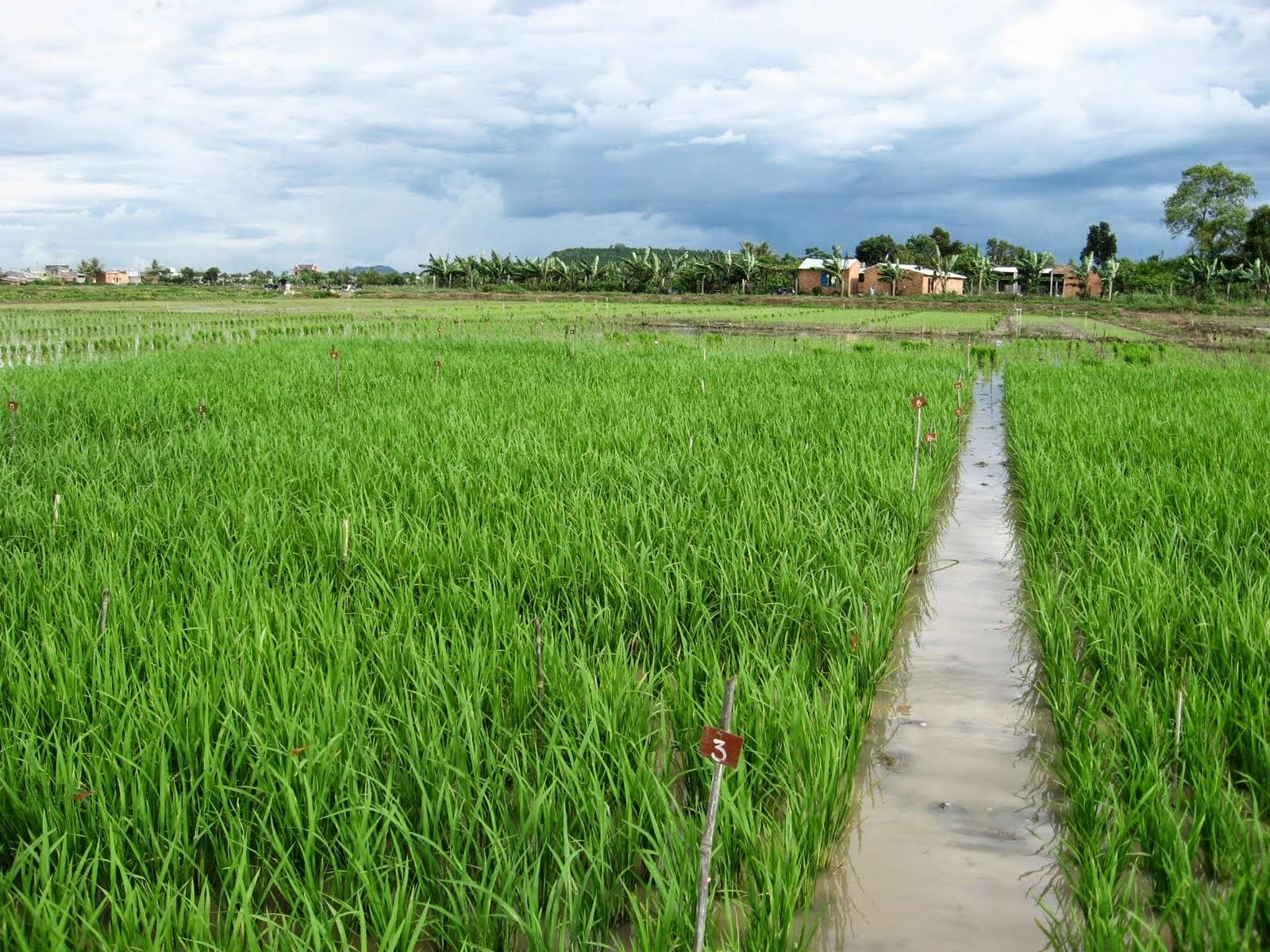 cay-luong-thuc-vietnam