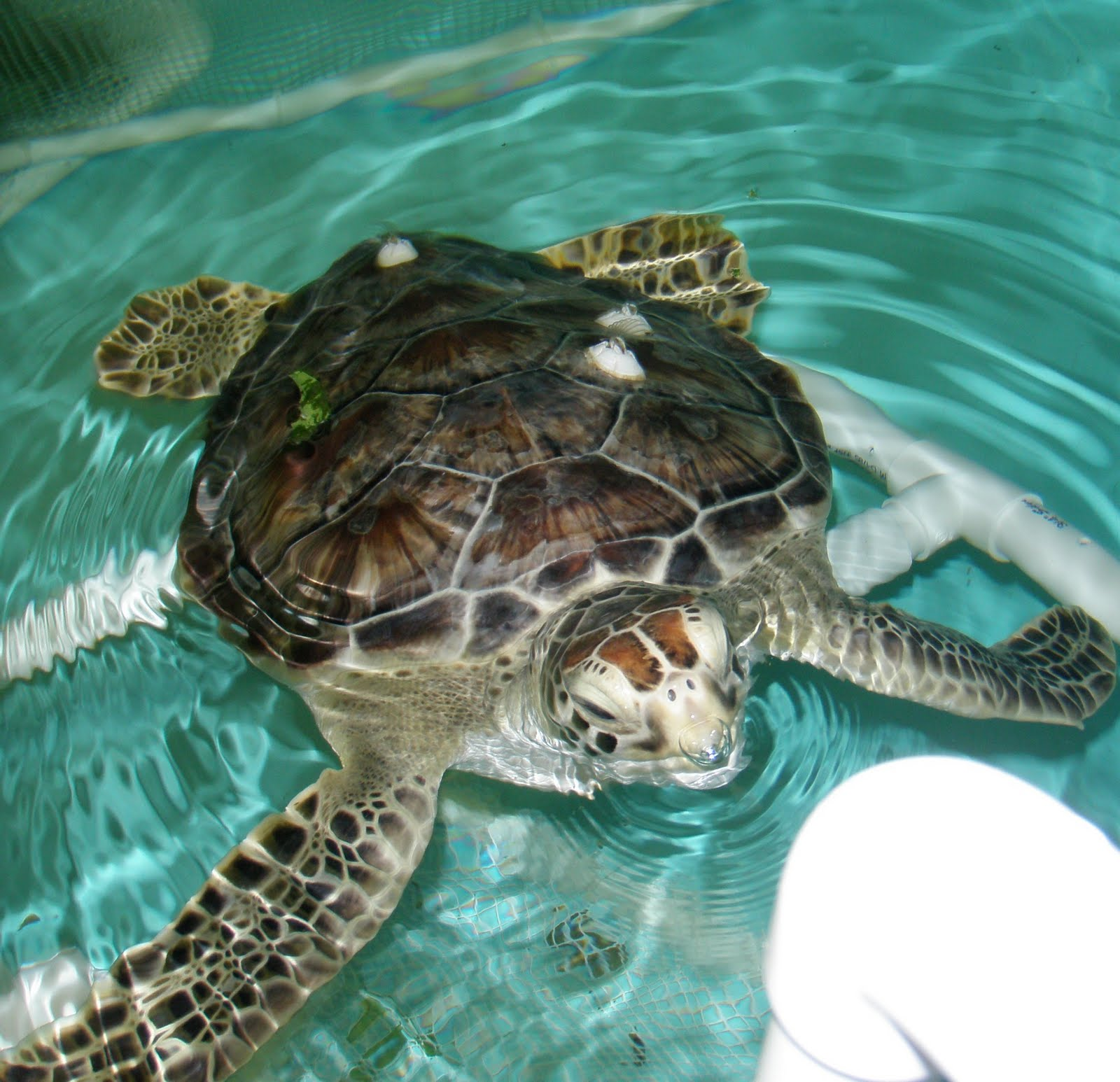 Sea Turtle Hospital: Earth Fare donates organic produce to feed ...